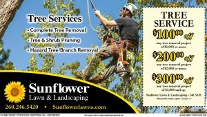 SunflowerTreeGuy.MM.10.20