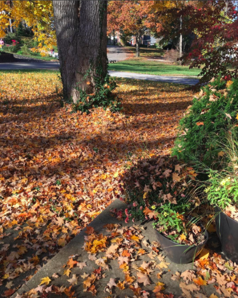 Fall Cleanup with All Lawn Care Service